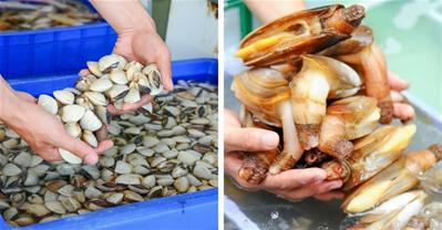 4 Công dụng chữa bệnh từ phần tưởng bỏ đi của hải sản