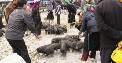 Lợn cắp nách Sapa ngon lẫy lừng ở Quán Xưa Ngọc Khánh