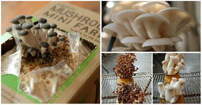 Tổng hợp 3 cách trồng nấm siêu nhanh, siêu tiết kiệm