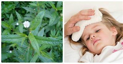 Trị ho hạ sốt khi viêm họng, viêm Amidan bằng bài thuốc dân gian